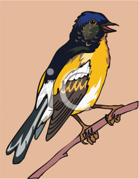 Clipart Image of a Songbird: a Finch Bird on a Tree Branch.