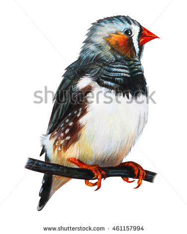 Domestic Bird Stock Photos, Royalty.