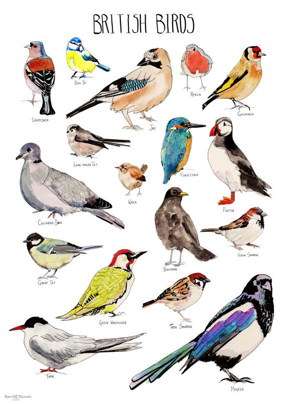 1000+ images about Watercolor Birds on Pinterest.