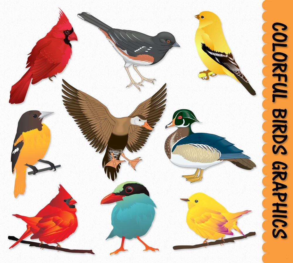 Birds Clip Art Graphics Bird Clipart Cardinal by GraphicsSupply.