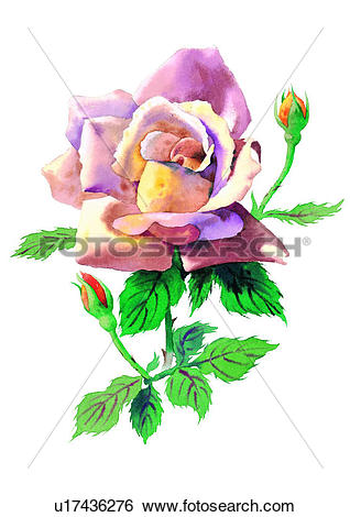Stock Illustration of watercolor, flower, plant u17436276.