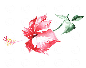 Watercolor Flowers Watercolor Clip Art Flower Clip by easyprintPD.
