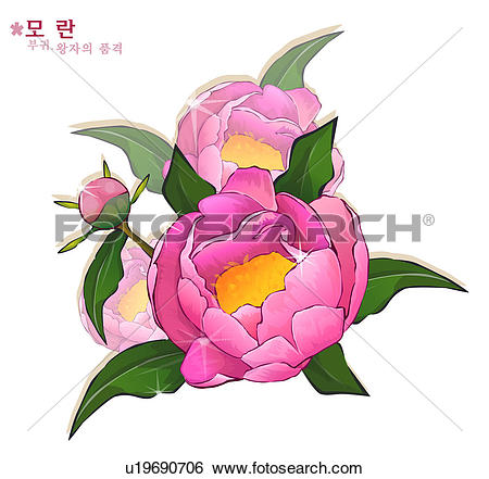 Stock Illustration of flowers, nature, plants, peony, plant, bloom.