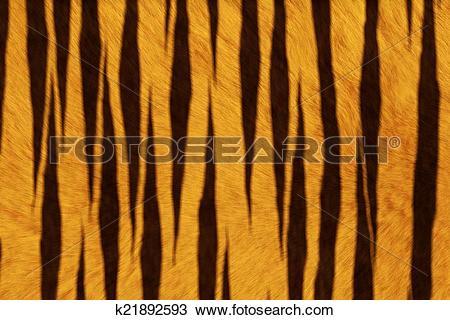 Drawing of Fur Animal Texture, Tiger k21892593.