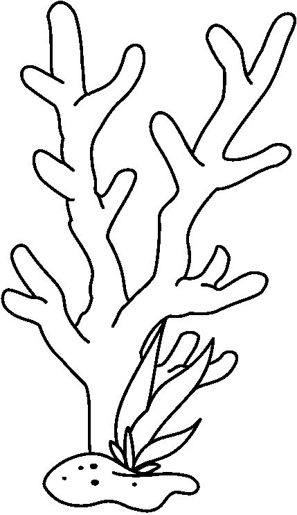 Coral Drawing.