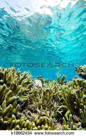 Stock Photo of Finger Coral.