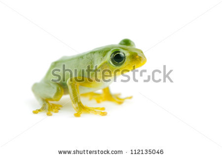 Finger coral tree frog free stock photos download (13,059 Free.