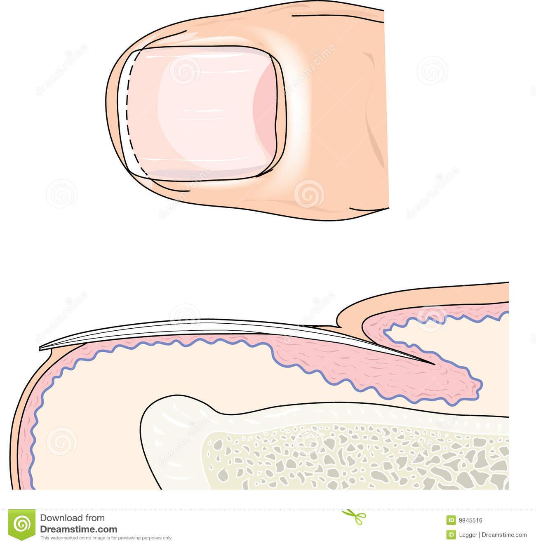 Finger Nail Royalty Free Stock Image.
