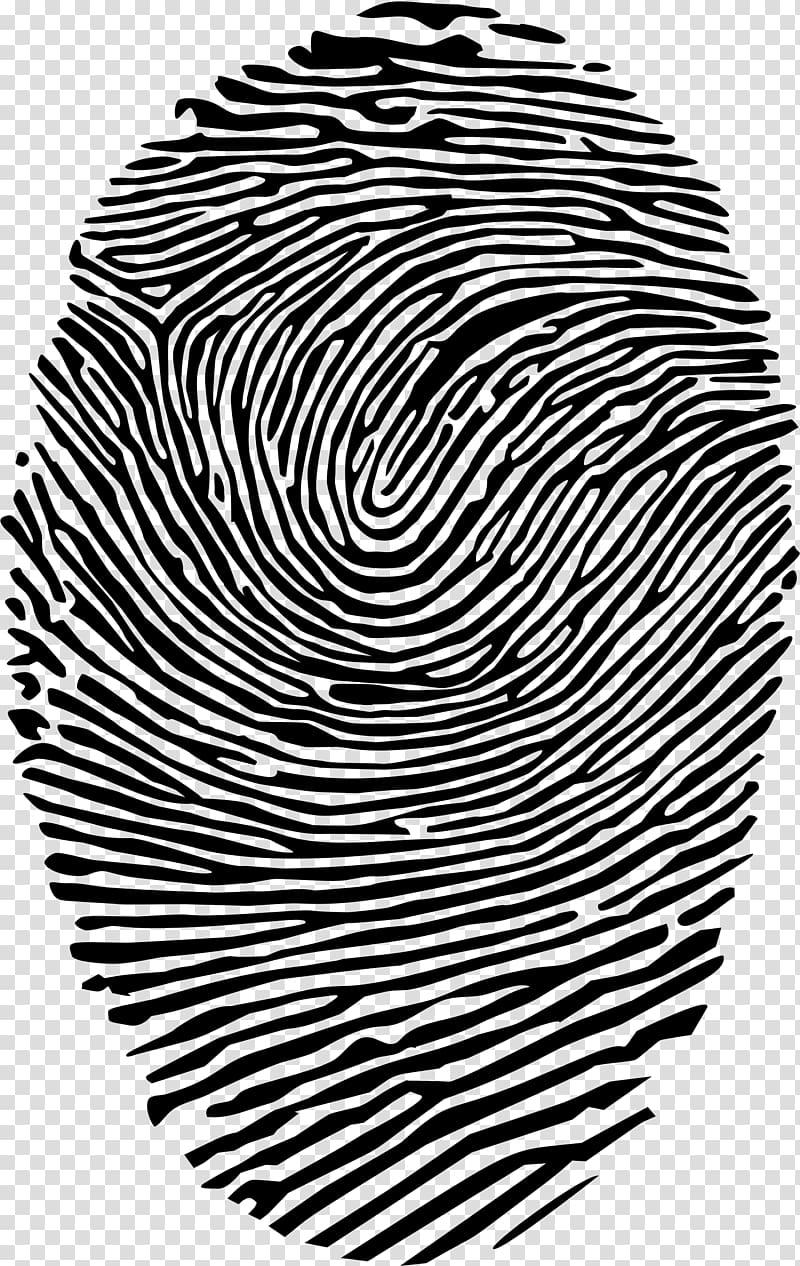 Fingerprint Spiral , finger print transparent background PNG clipart.