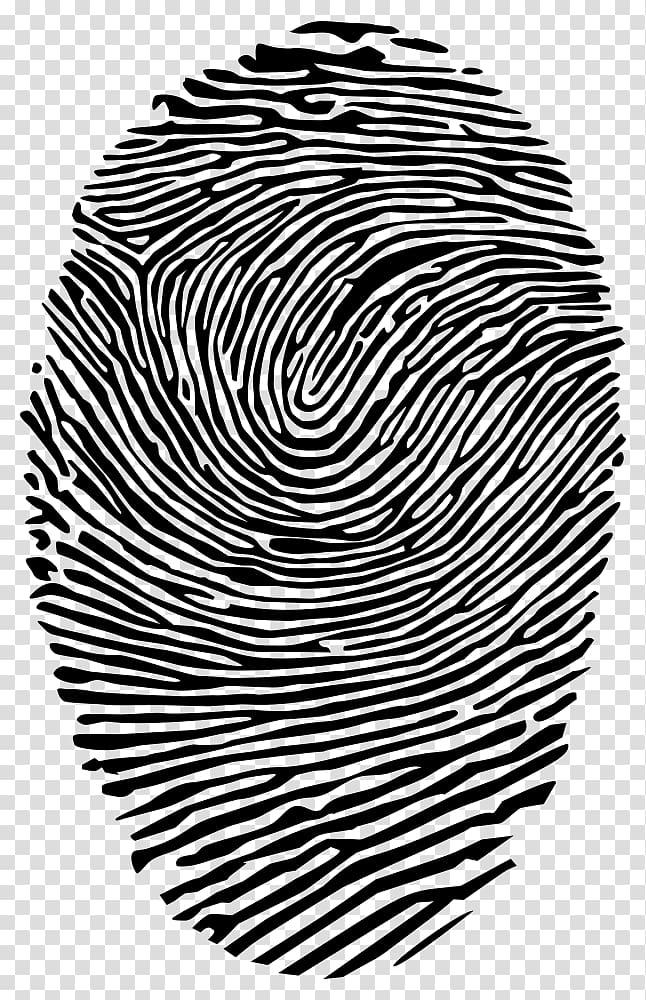 Fingerprint CMYK color model Dermatoglyphics , others transparent.