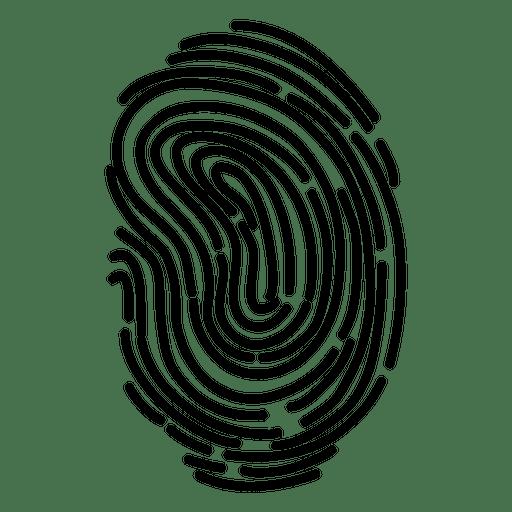 Fingerprint detailed curves.