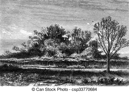 Stock Illustration of The fig tree Roscoff, Finistere department.