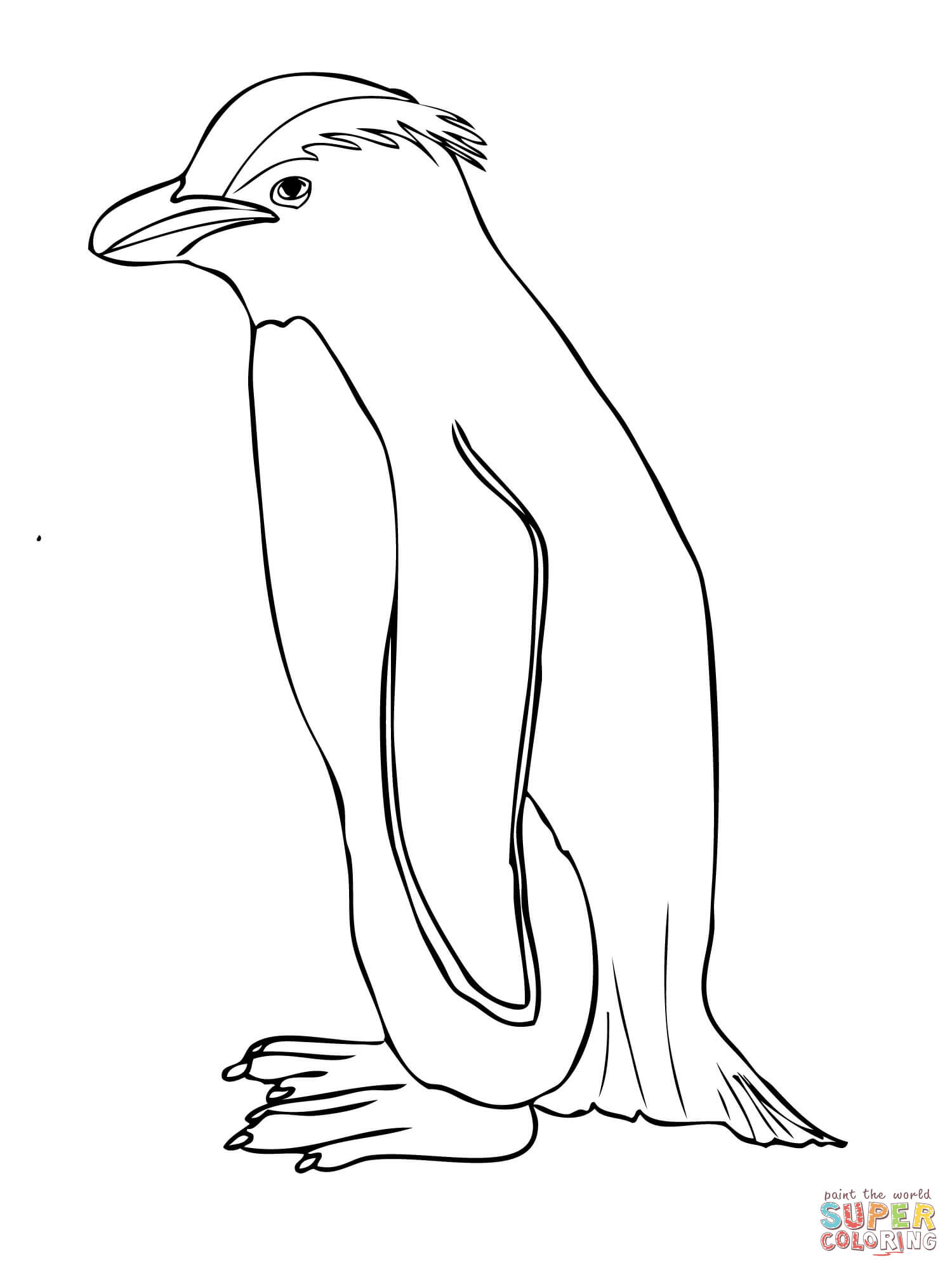 Crested penguin clipart.
