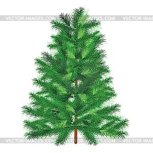 fir tree.