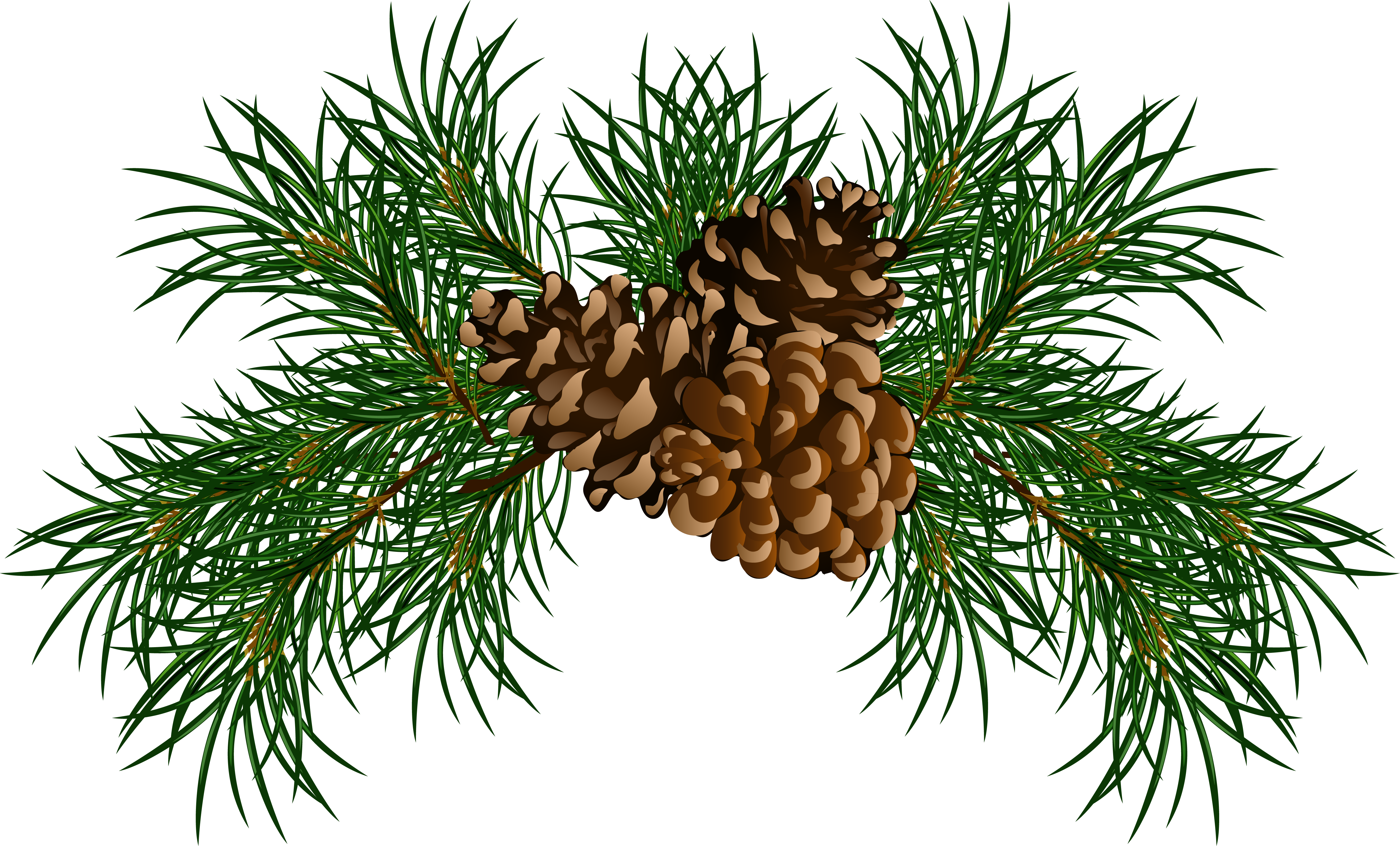 Christmas pine cone clipart.