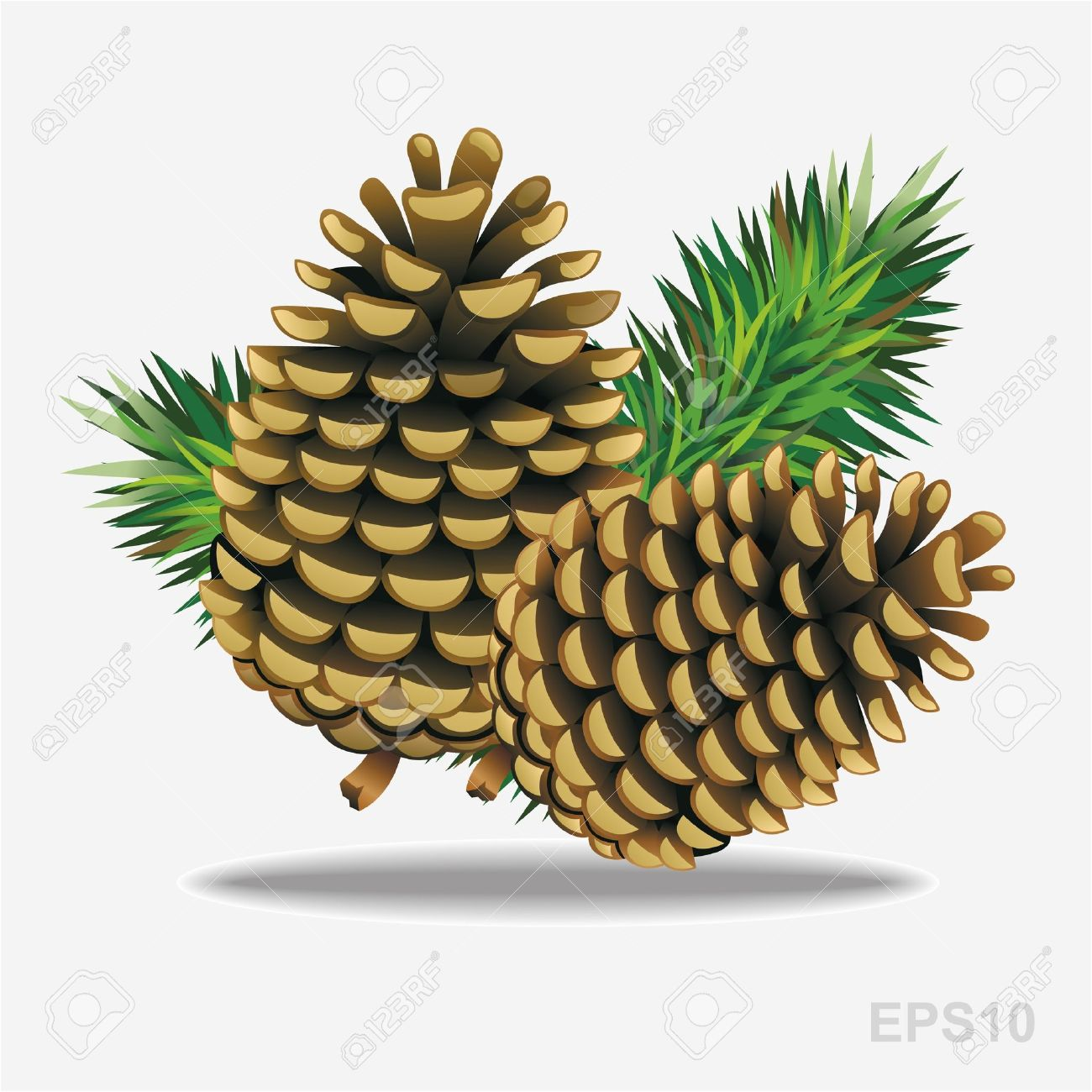 Pine Cones With Pine Needles. Vector Royalty Free Cliparts.