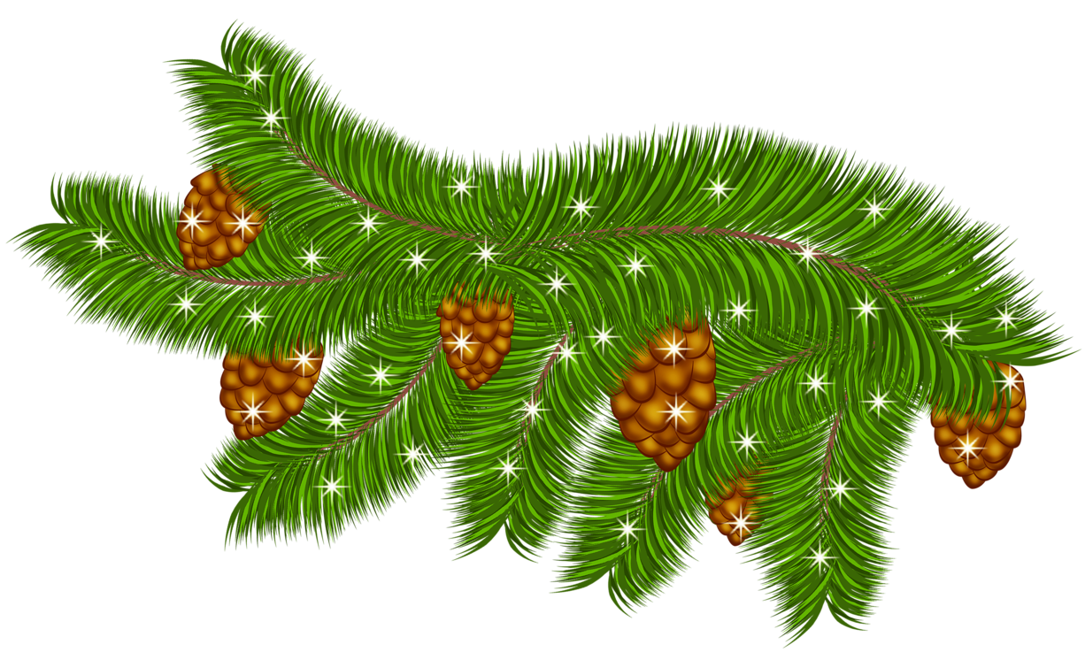 Transparent Pine Branch with Pine Cones PNG Clipart.