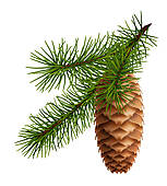 Clip Art of Branch of pine cones k7886028.