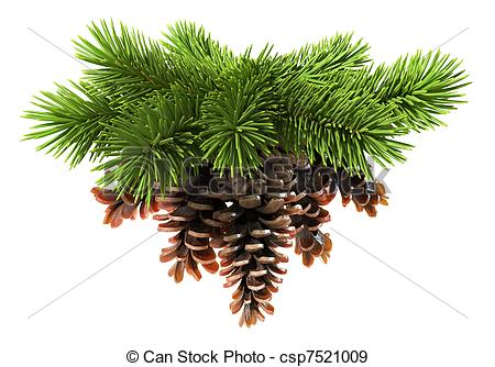 Pine cones Illustrations and Clip Art. 1,196 Pine cones royalty.