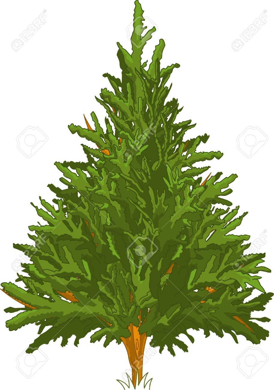 Green Pine Tree For Your Design Royalty Free Cliparts, Vectors.