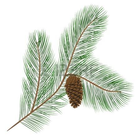 6,177 Pine Needles Stock Illustrations, Cliparts And Royalty Free.