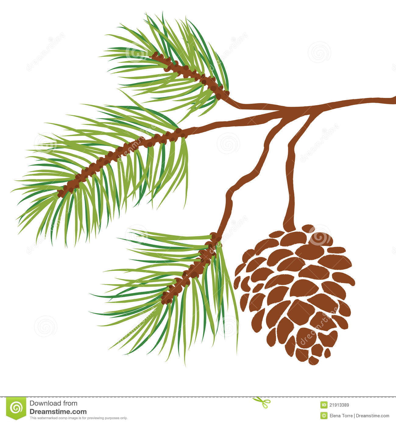 Longleaf Pine Needle Clip Art.