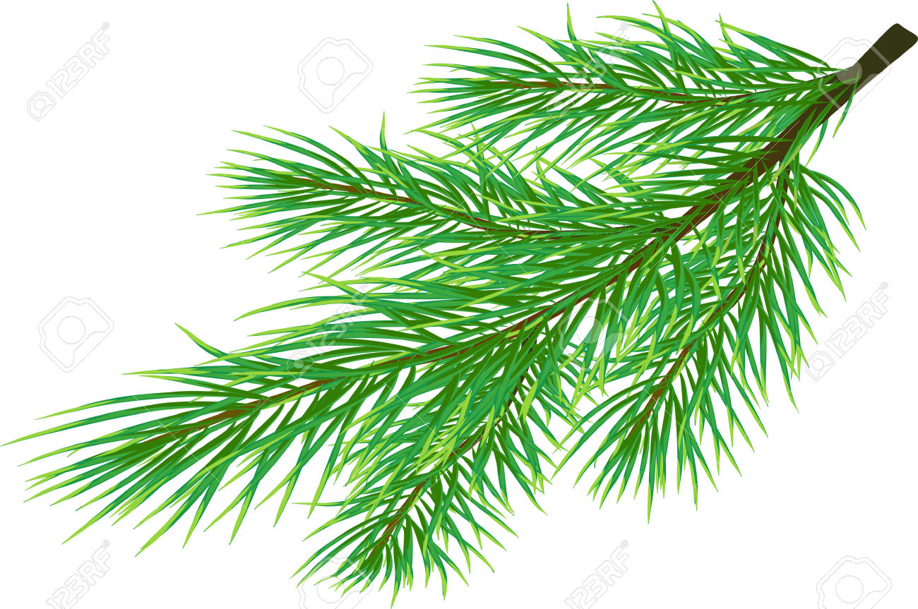 Fir Twig Isolated On White ( Vector) Royalty Free Cliparts.