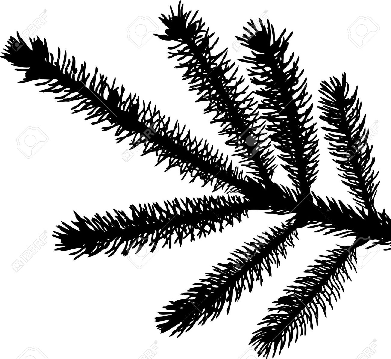 Needle tree black and white clipart.