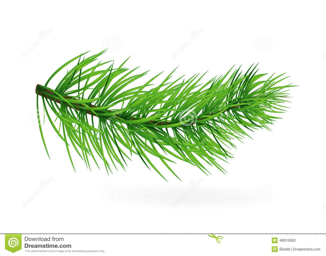 Pine.