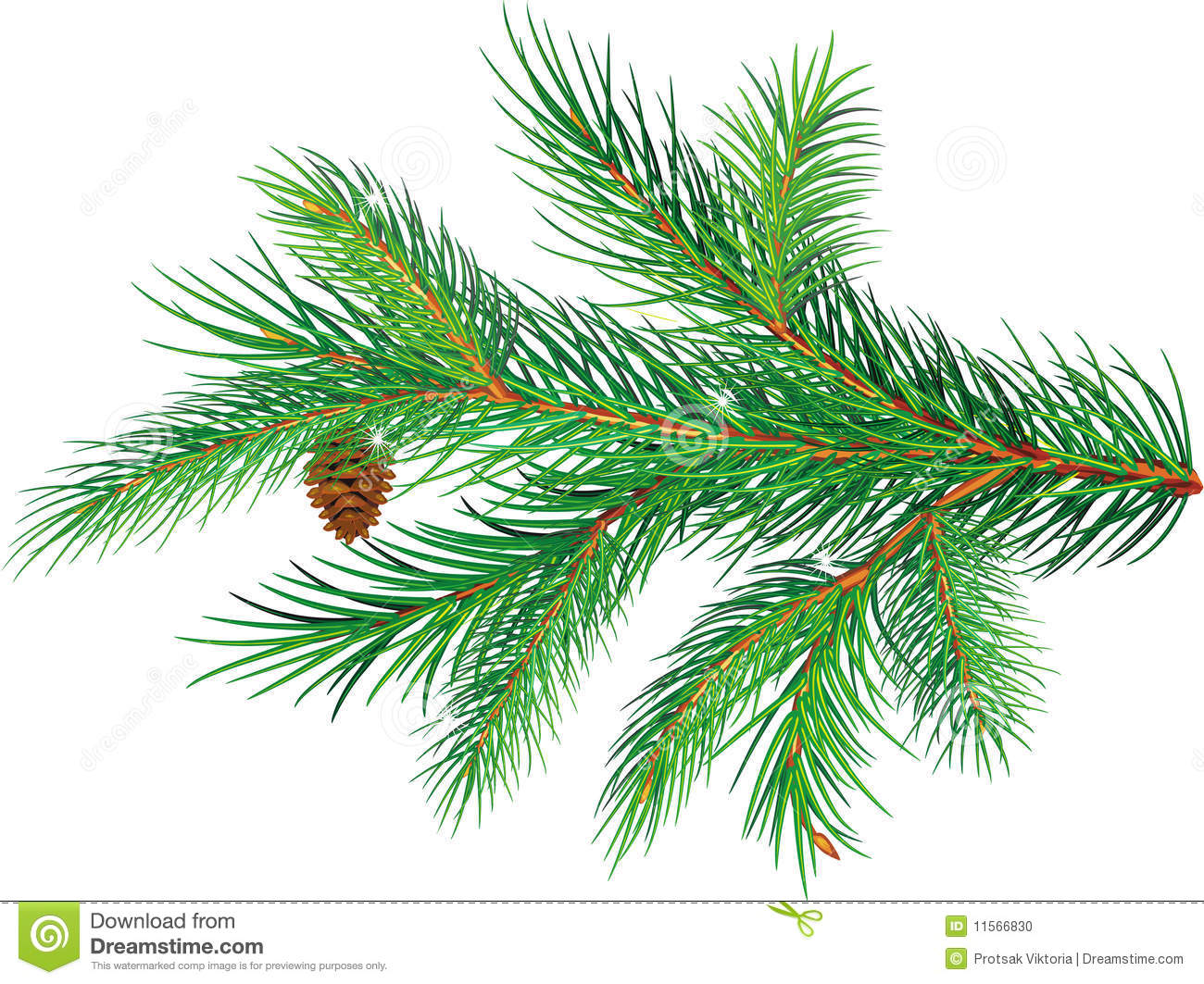 Pine Branch Stock Photo.