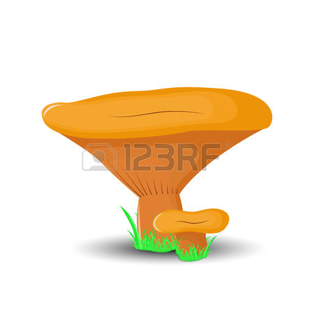 0 The Saffron Milk Cap Stock Vector Illustration And Royalty Free.