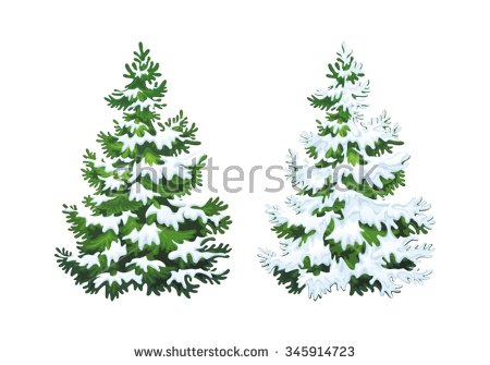 Evergreen Tree Stock Images, Royalty.