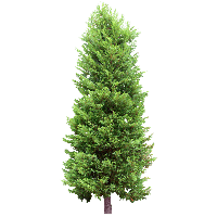 Download Fir Tree Free PNG photo images and clipart.