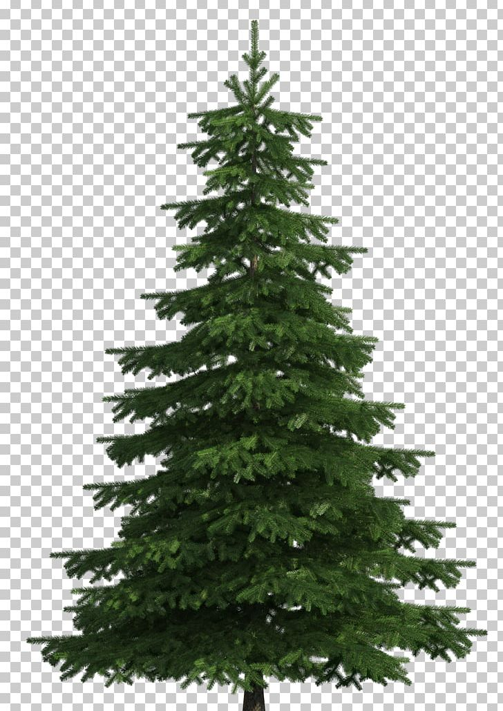 Sugar Pine Scots Pine Balsam Fir Tree PNG, Clipart, Balsam Fir.