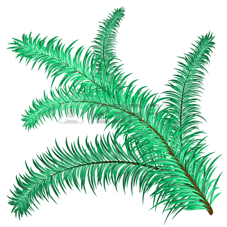 Twig Of Evergreen Fir On White. Vector Clip.