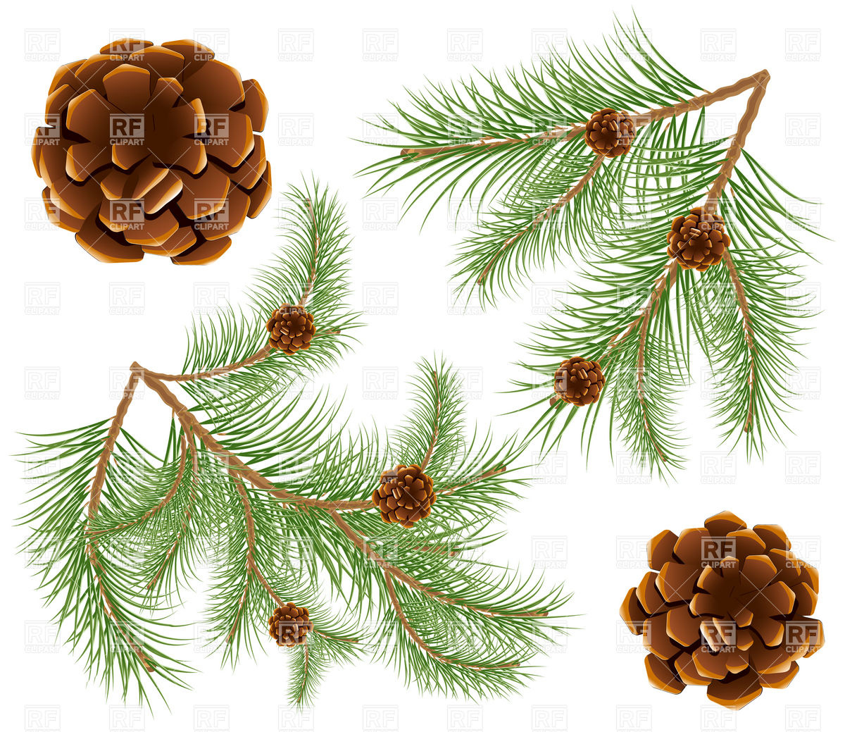 Pine cones with pine needles twig Vector Image #5183.