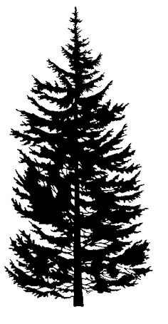 Evergreen Trees Silhoette Clipart.