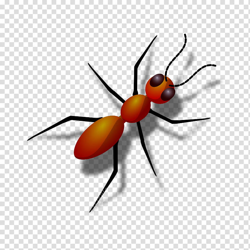 Red Check, Insect, Red Imported Fire Ant, Black Carpenter.