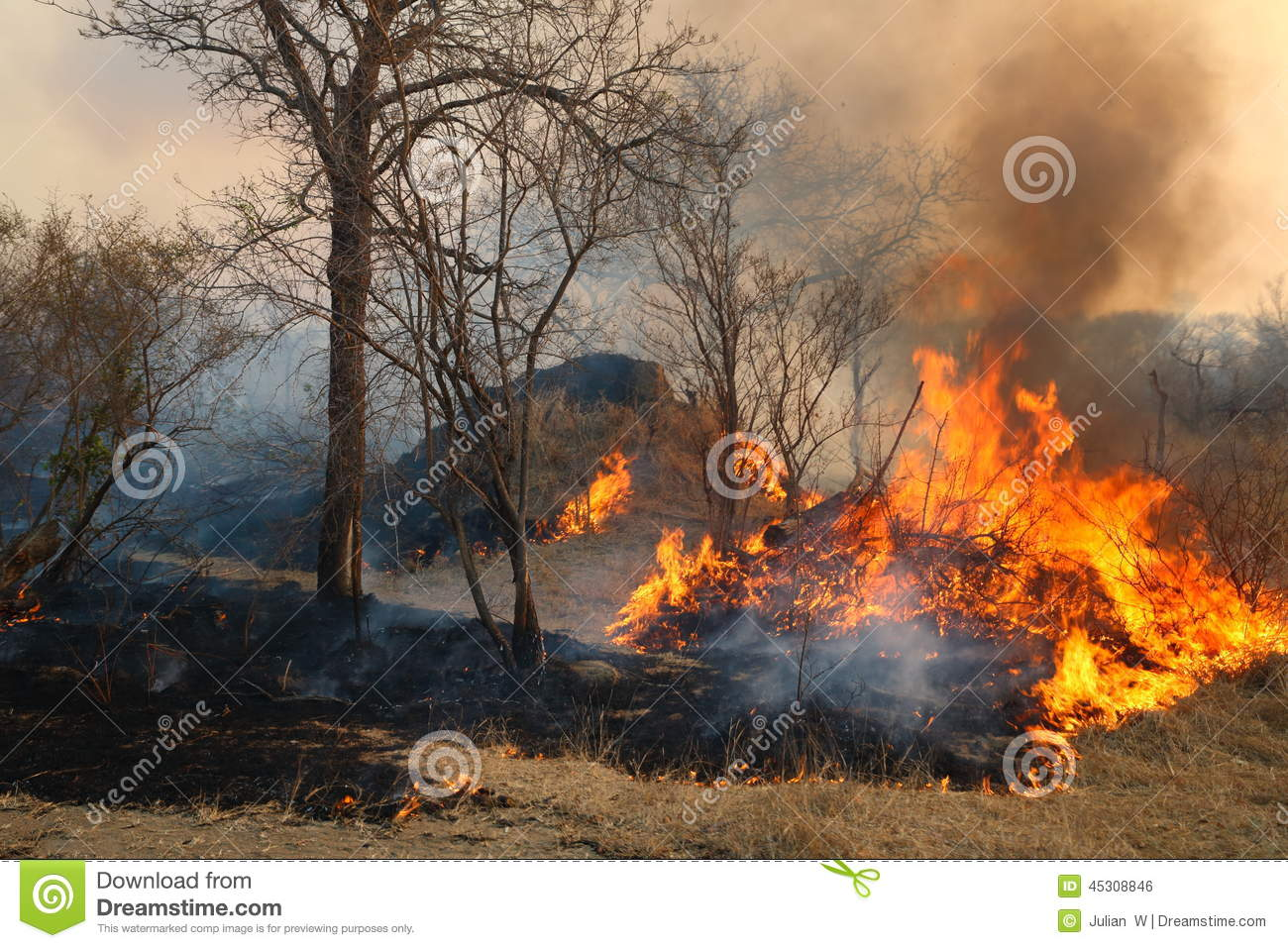 Wild Forest Fire Stock Photo.