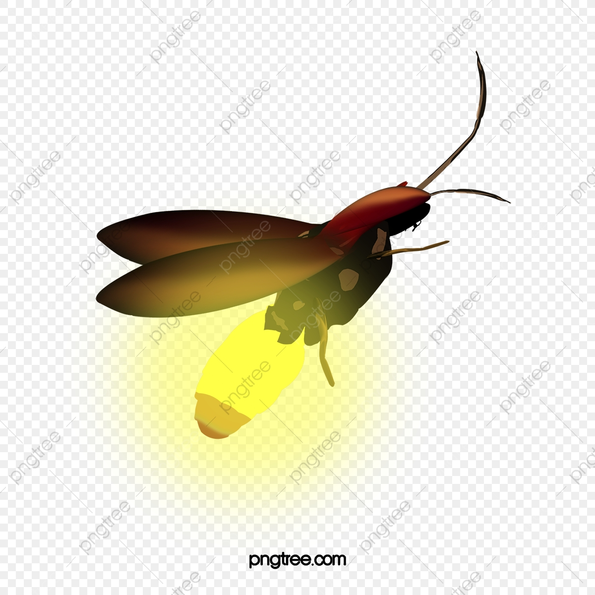 A Firefly, Firefly Clipart, In Kind, Light PNG Transparent Clipart.