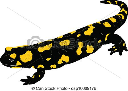 Vectors Illustration of Fire Salamander (Salamandra salamandra.