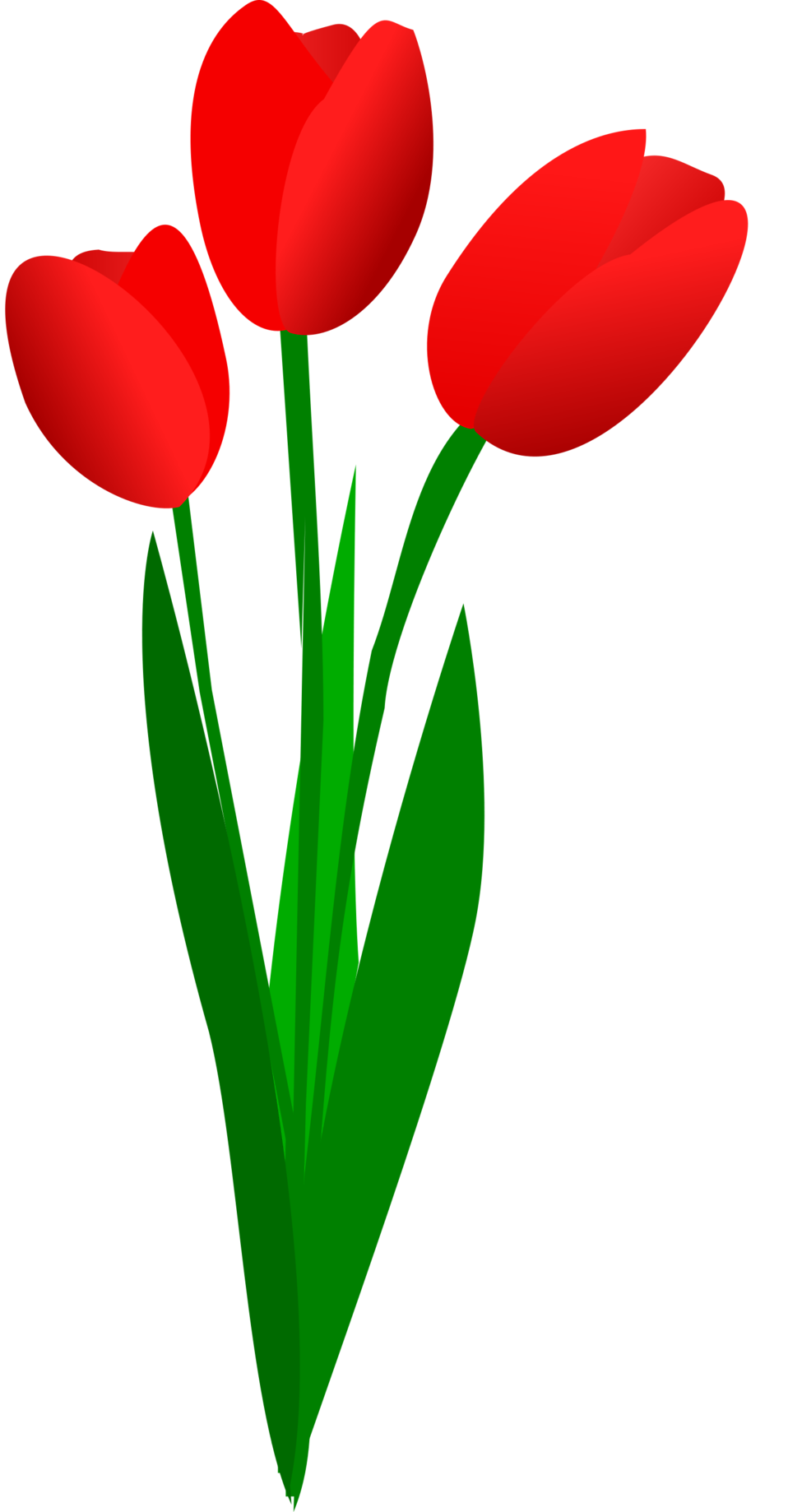 Tulip clipart transparent background.