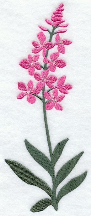 Fire Weed Clipart 20 Free Cliparts Download Images On