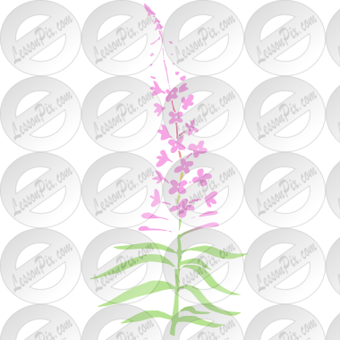 Fireweed Stencil for Classroom / Therapy Use.