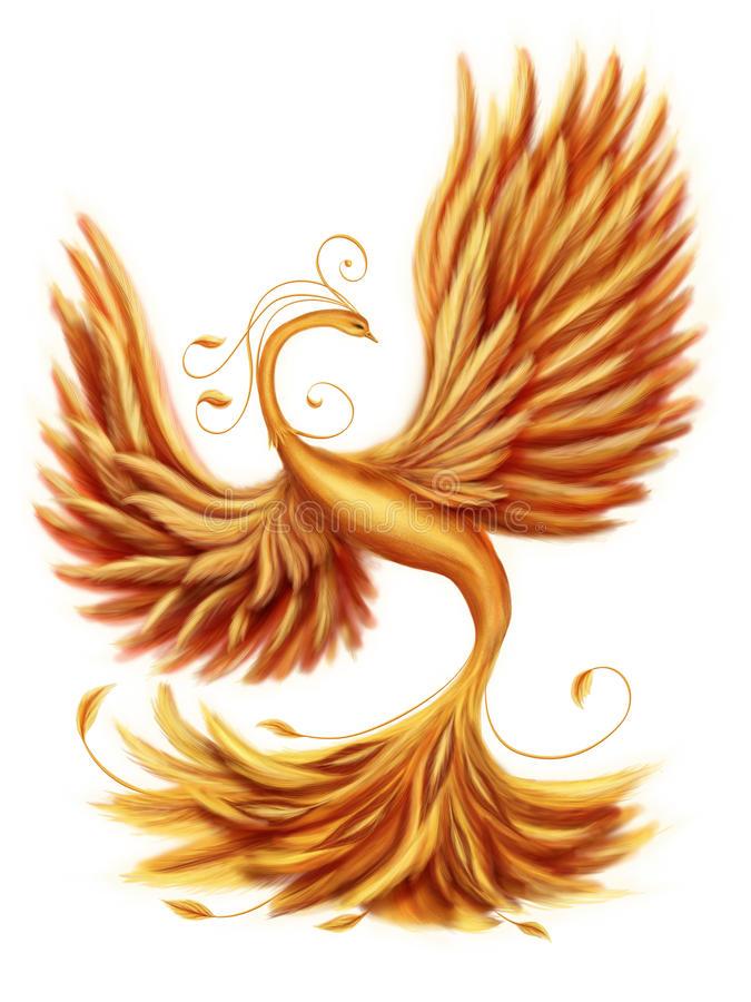 Firebird Stock Illustrations.