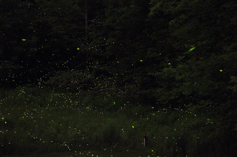 How does nanoscale chemistry make fireflies glow brightly.