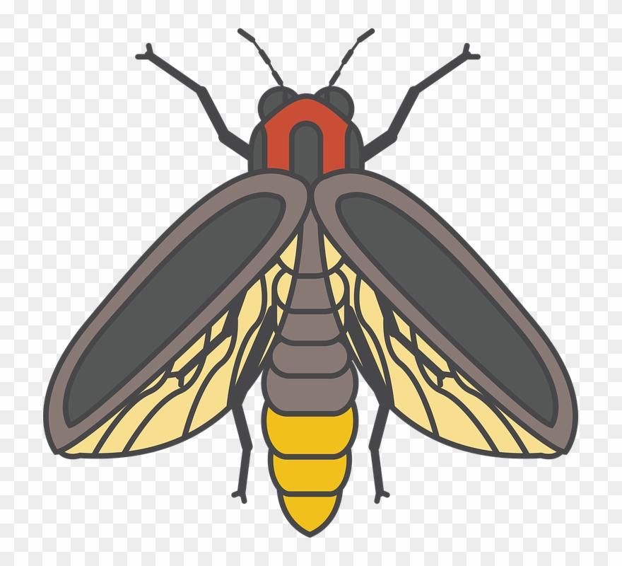 Bee Black Honey.