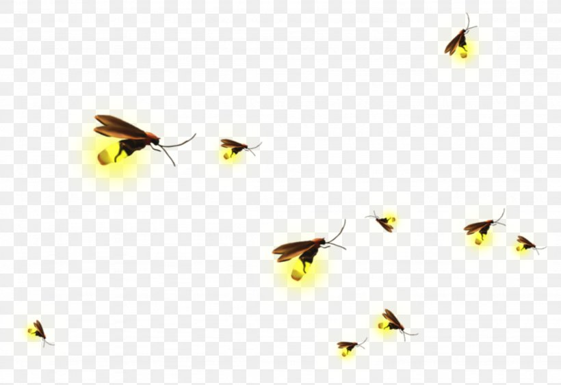 Clip Art Firefly Image Insect, PNG, 2254x1550px, Firefly.