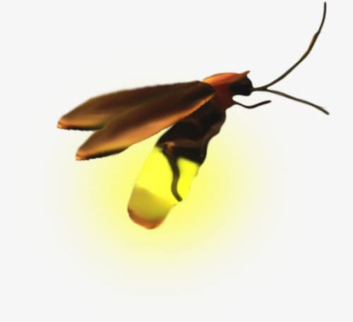A Firefly PNG, Clipart, Firefly Clipart, Good, Good Looking, In Kind.