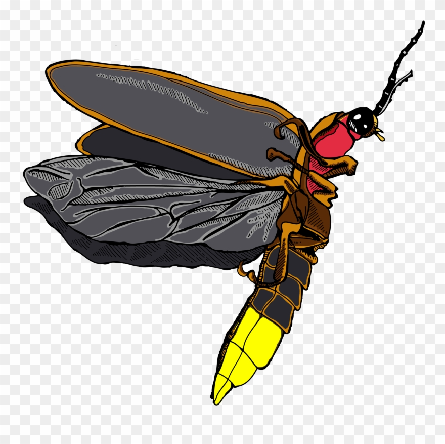 Firefly Icon Clipart.